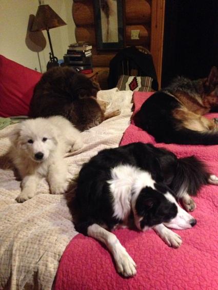 Bob, Ruby, Pearl, and Matti Rest Up