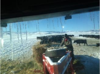 Abbie Mans the Hay Sled